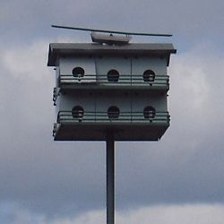 Chickadee Bird House Plans - Attracting Wild Birds into your own