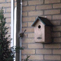 Chickadee Bird House Plans Find House Plans